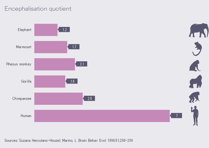 Comparaison du quotient d'encéphalisation chez six mammifères (©Wikimedia)