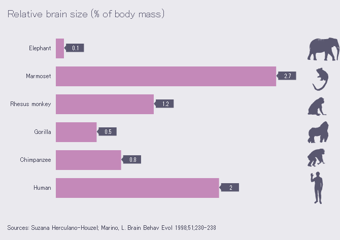 Tableau comparatif de la taille relative du cerveau de six mammifères (©Wikimedia)