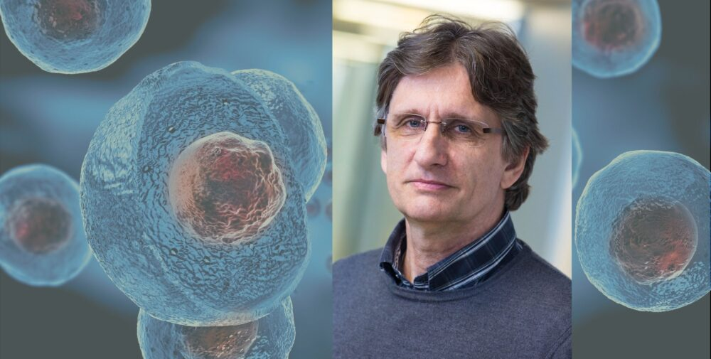 Pierre Savatier : « Les chimères homme-animal sont une alternative à l'expérimentation humaine » (©Shutterstock/Giovanni Cancemi - DR)