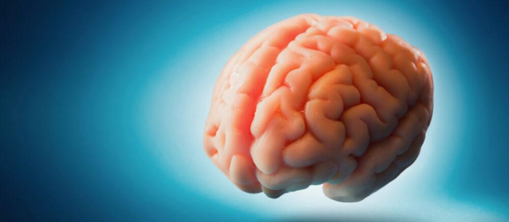 Cerveau flottant sur fond bleu (photo : fergregory/123RF