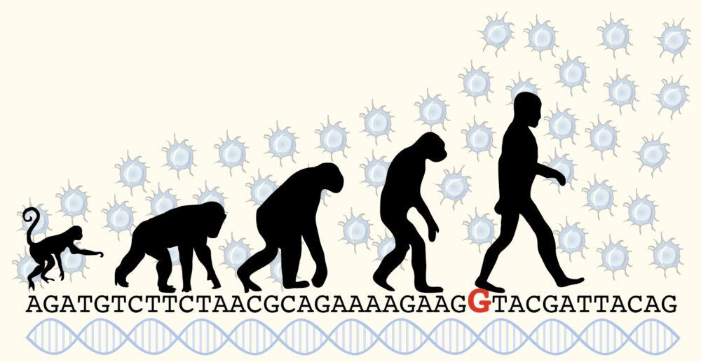 Ces gènes qui ont rendu notre cortex humain (©Max-Plank_Neuroscience)