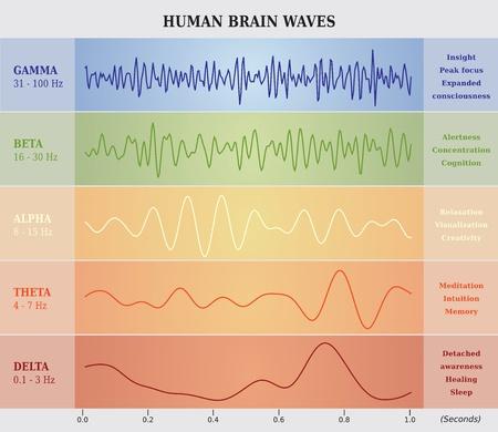 Fréquences des ondes cérébrales © artellia - 123RF