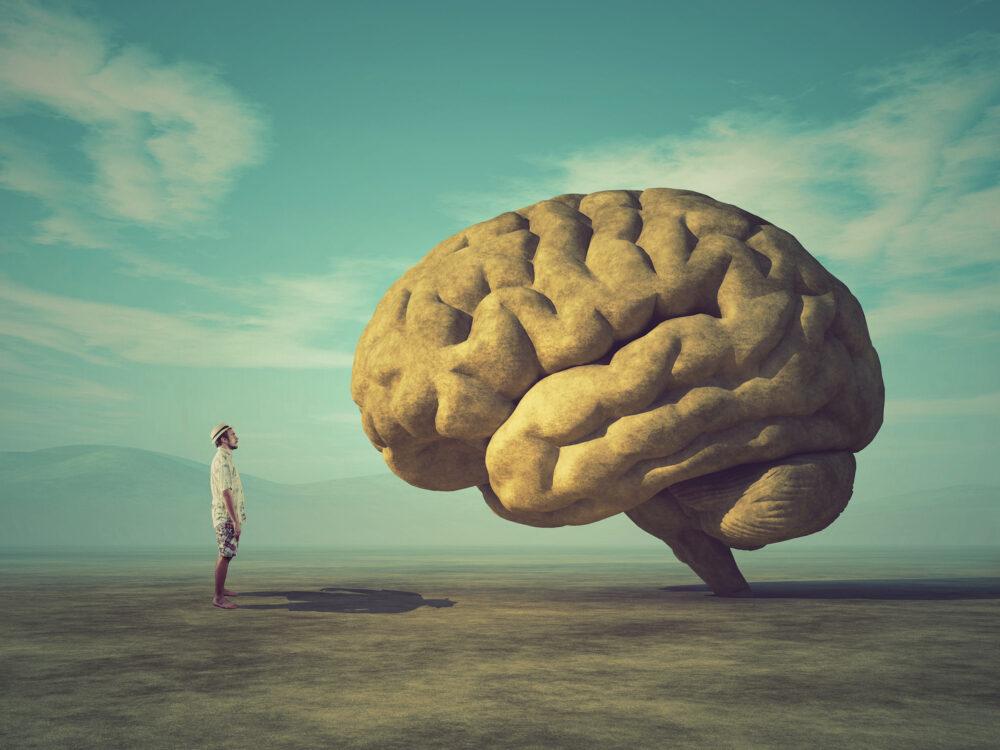 Le cortex cingulaire peut-il vraiment « changer l'avenir de notre civilisation » ? (©Shutterstock/Orla)