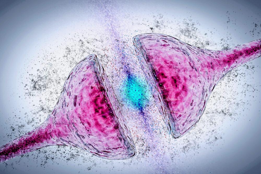 Pourquoi la recherche sur la synapse reste essentielle (©Shutterstock/CI Photos)