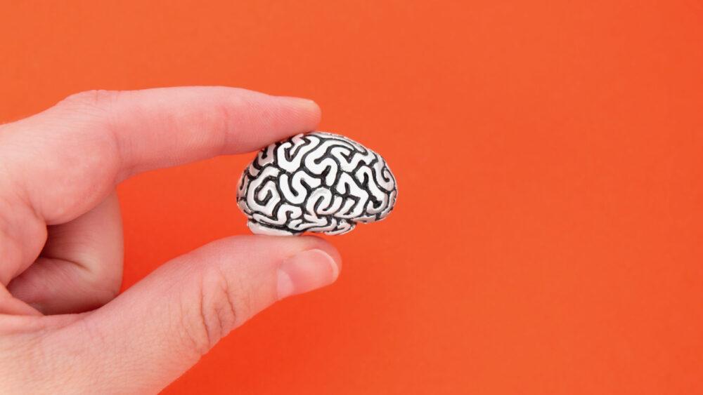 La taille du cerveau influence-t-elle l'intelligence ? (©shutterstock/E. Chizhevskaya