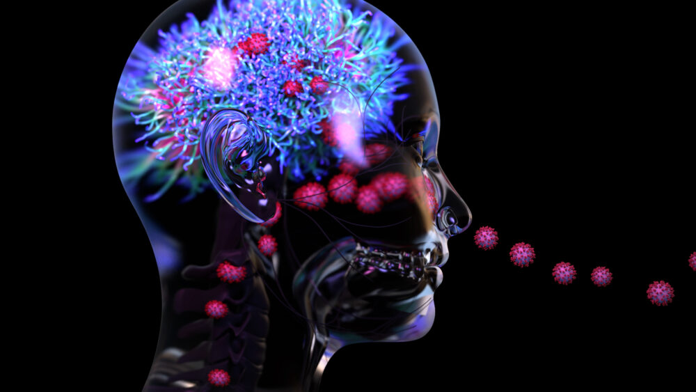 Covid-19 et cerveau : oui, le virus peut infecter les neurones (©Shutterstock/Design_Cells)