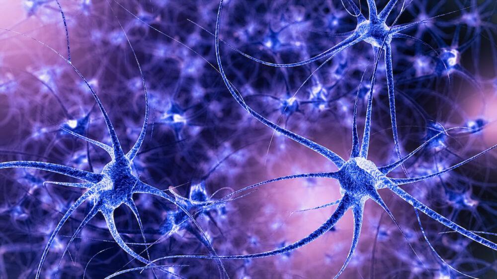 Qu'est-ce que la plasticité cérébrale ©Shutterstock/Sanja Karin Music)