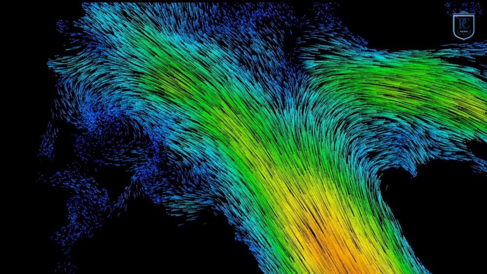 Vascularisation du cerveau humain (©ESPCI Paris - PSL, Inserm, CNRS)